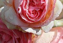 Amati fiori