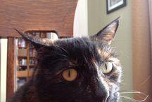 Maya kitty