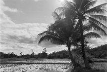 VIETMINH landscapes
