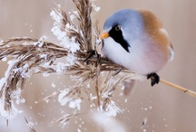 Birdies  / by Laura