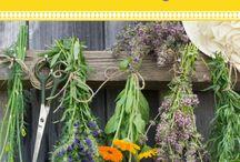 Medicinal and edibal plants and herbs