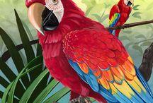тропики птицы