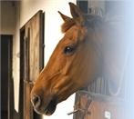 horses-beautiful / by Brianna Sloan