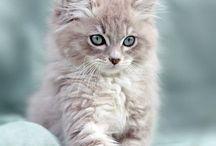 Gattini ❤