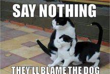 Cat fun