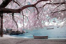 Beautiful Photography / by Melanie Coburn