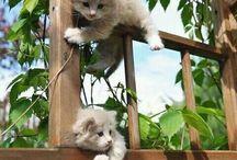 Katt  - kompiser
