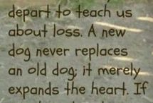 sentences...