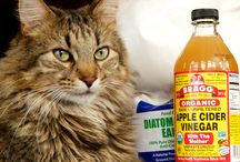 Get rid of fleas for cats