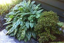 New Zealand Native Plants / Random collection of New Zealand native plants