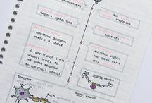Organización/decoración de apuntes.