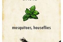 Plants repellent