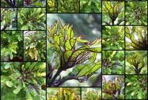 Gardening Gems. / by Susan Della Rocca