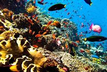 /komodo-diving-tour-3d-2n