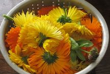 Calendula Recipies / by Anna Achilleos