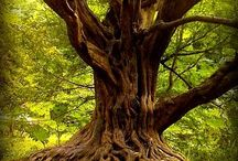 Amazing Trees / Old & Wise * Beautiful & Bright
