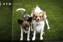 Pet Friendly Turf / Dogs LOVE SYNLawn!