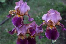 цветы / Фотографии цветов в макро