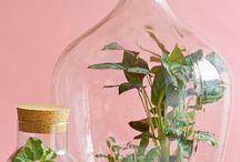 Bottle Gardens/Ecosphere
