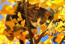 Cute Critters / by Robin Kauffman