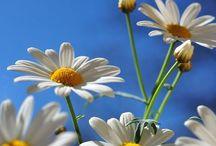 Sunflowers/asst Flowers