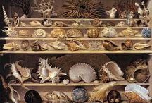 貝のアート