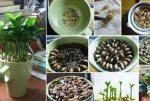 Plants from Seeds