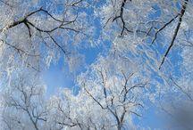 Seasons / by Kathleen Julia