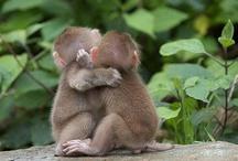 babymonkeys