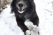 #bears#