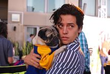 Cole Sprouse ♥️