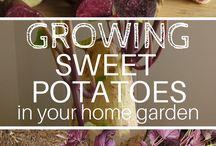 growing healthy foods