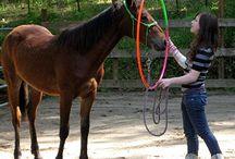 Horse desensitizing