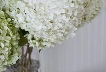 Flowers & pretty things