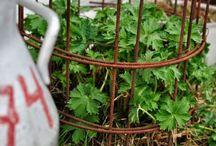 Växthus Inredning