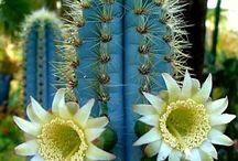 꽃, 식물