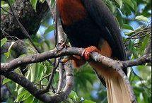 os pássaros mais belos do mundo.