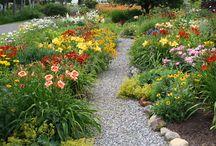Maine Gardens / by Carol Hewitt