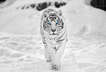 Белые животные