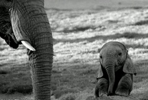 Animals <3 / by Jasmine Gilmore