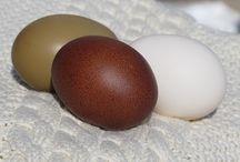 érdekes tojás