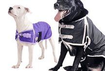 Top 10 Best Dog Sweaters in 2017
