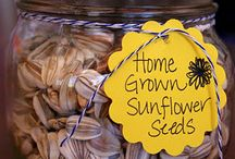 Sunflowers / by Jen's Sunshine Farm