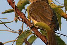 Adventurous Tour / Enjoy Adventurous Tour with United 21 Jungle Resort Pench, Madhya Pradesh, India.