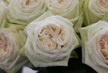 Garden Roses / Garden Roses