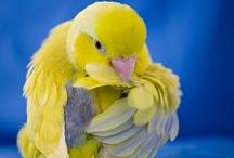 parrots ❤