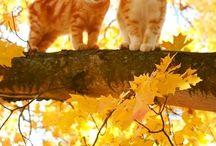 Gatinhos laranja