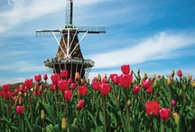 Essential Holland & Belgium: Tulips In Spring 2017 / Picking the best time to visit Holland and Belgium is a breeze — it's tulip time! You'll witness the pastoral beauty of nature when tulips blanket the countryside, and canals and streets bustle with activity.