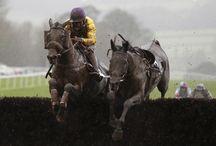 Horse Racing Festivals