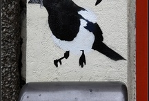 Magpies / by Suzannah Evans